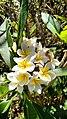 Flores do Cerrado 10.jpg