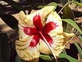 Flower 45.JPG