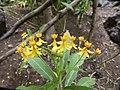 Flower at the Oasis Park - Fuerteventura - 01.jpg