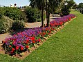 Flowerbed, Babbacombe Downs - geograph.org.uk - 906549.jpg