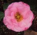 Flowers - Uncategorised Garden plants 281.JPG