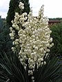 Flowers - panoramio (19).jpg