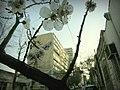 Flowers - panoramio (21).jpg
