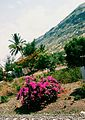 Flowers and hill.jpg