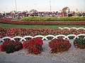 Flowers from Miracle Garden.jpg