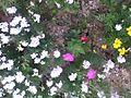 Flowers of Nepal.jpg