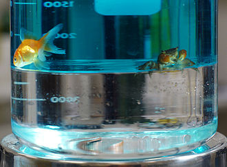 Fluorocarbon - Immiscible layers of colored water (top) and much denser perfluoroheptane (bottom) in a beaker; a goldfish and crab cannot penetrate the boundary; quarters rest at the bottom.