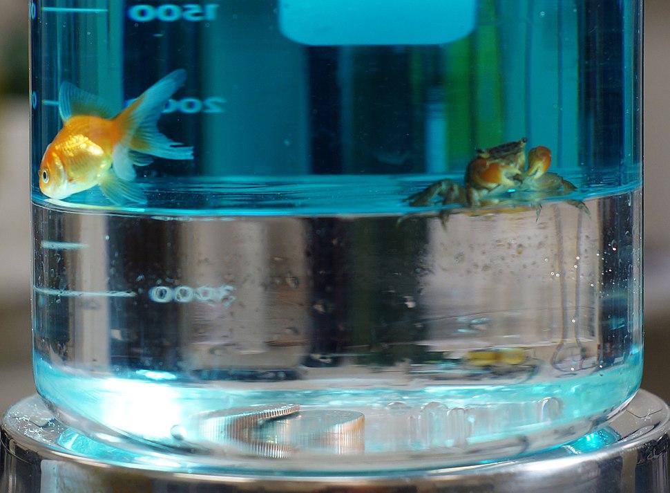 FluorocarbonCrabFish