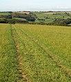 Footpath to Furzedown Wood - geograph.org.uk - 1510716.jpg