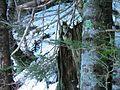 Forêt (2).jpg
