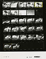 Ford A2102 NLGRF photo contact sheet (1974-11-23)(Gerald Ford Library).jpg