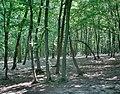 Forest - panoramio - paulnasca (79).jpg