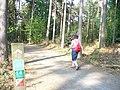 Forest Trail, Bedgebury Forest - geograph.org.uk - 797003.jpg