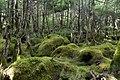 Forest in Yatsugatake 49.jpg