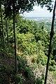 Forest on Khao Tha Phet 2.jpg