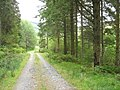 Forestry road east of Blaen Glasgwm - geograph.org.uk - 557694.jpg