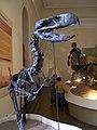 Foto de Esqueleto no Museu Nacional.jpg