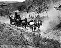 Freighting service showing horse drawn wagon, Chelan County, May 11, 1907 (LL 1073).jpg