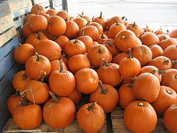 a large pile of pumpkins