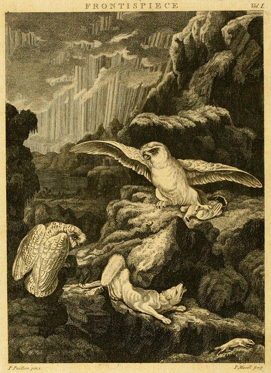 Frontispiece to Arctic Zoology - Peter Paillou - Peter Mazell