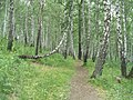 G. Miass, Chelyabinskaya oblast', Russia - panoramio (56).jpg