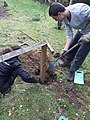 GT Replacing a post in anthill meadow fence.jpg