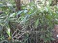 Gardenology.org-IMG 0675 rbgs10dec.jpg