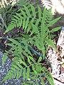 Gardenology.org-IMG 0806 rbgs10dec.jpg