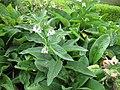 Gardenology.org-IMG 2766 rbgs11jan.jpg