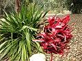 Gardenology.org-IMG 4768 hunt0904.jpg