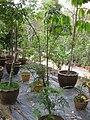 Gardenology.org-IMG 7235 qsbg11mar.jpg