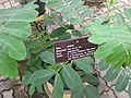 Gardenology.org-IMG 7985 qsbg11mar.jpg