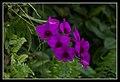 Gardens by the Marina Bay-31 (8328741321).jpg