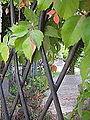 Gate (4092850759).jpg
