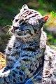 Gato-pescador.jpg