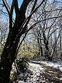 Georgia snow IMG 4864 (38947237561).jpg