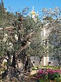 89px-Gethsemane.jpg