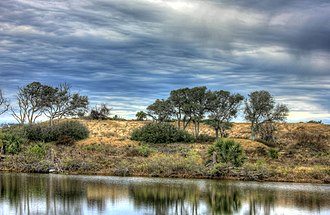 Galveston Island State Park - Restored dune habitat in the park.