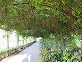 Giardino bardini, galleria verde 01.JPG