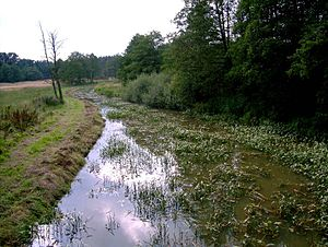 Hamme (river) - Image: Giehlerbach springmoor
