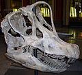 Giraffatitan skull.jpg