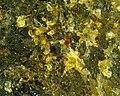 Granite 20x M2 (42895409162).jpg