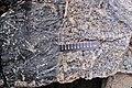 Granite and igneous dike at Vulcan Materials Quarry.jpg
