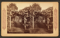 Grape arbor at Germantown, from Robert N. Dennis collection of stereoscopic views.png
