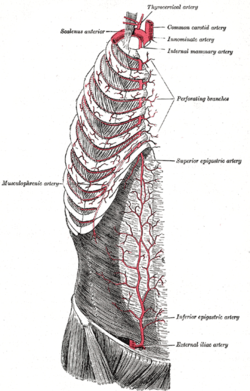 Internal thoracic artery - Wikipedia, the free encyclopedia