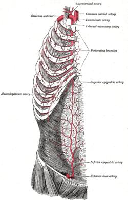Internal thoracic artery - Wikipedia