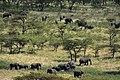 Great Migration in progress, the northern Serengeti (6) (28501932372).jpg