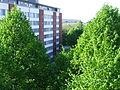 Green-trees-and-a-builing.jpg