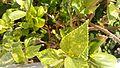 Green Leaves grouped.jpg