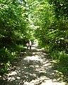 Green lane near Clooncoose - geograph.org.uk - 1192463.jpg